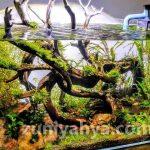 Aquarium Aquascape Yang Keren