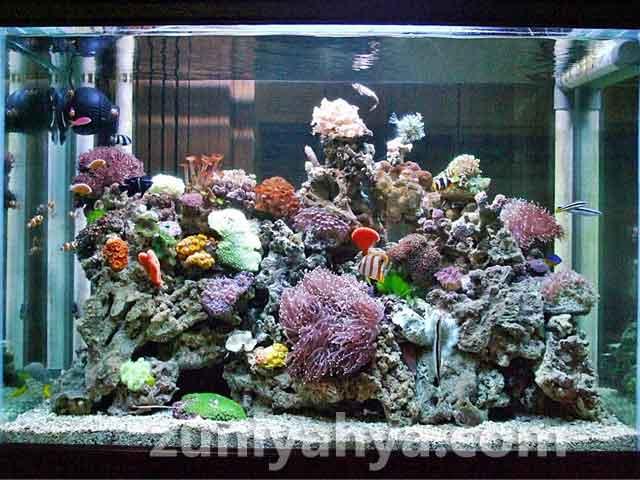 Berikut Ini Jenis Ikan Hias Air Laut Bisa Hidup Di Air Tawar