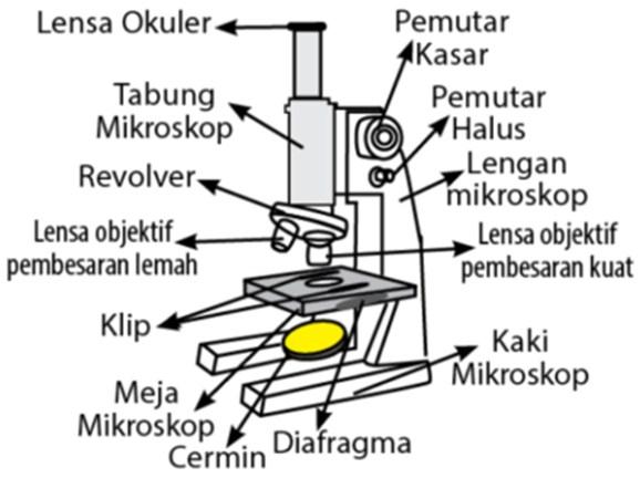 Gambar Mikroskop Cahaya Yang Dilengkapi Dengan Bagian-bagiannya