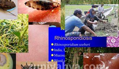 Contoh Simbiosis Parasitisme