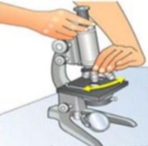 Gambar Cara Menggunakan Mikroskop Cahaya-Ganti Lensa Objektif