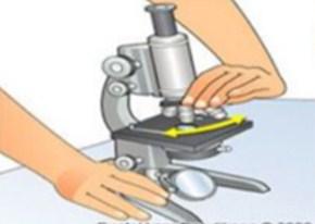 Gambar Cara Menggunakan Mikroskop Cahaya-Memutar Revolver