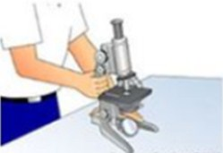 Gambar Cara Menggunakan Mikroskop Cahaya-Mengambil dan Membawa Mikroskop