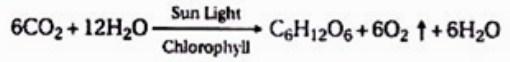 Persamaan Reaksi Oksigen Dari Air Dalam Proses Fotosintesis