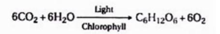 Persamaan Sederhana Fotosintesis