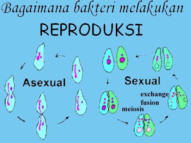 Gambar Reproduksi Bakteri