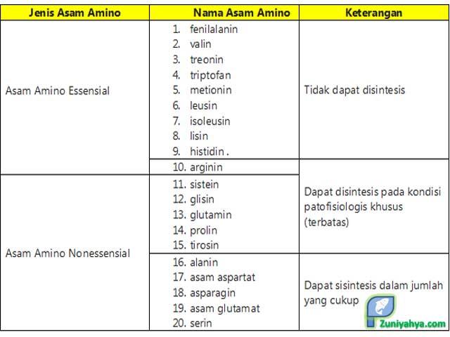 Jenis-jenis Asam Amino