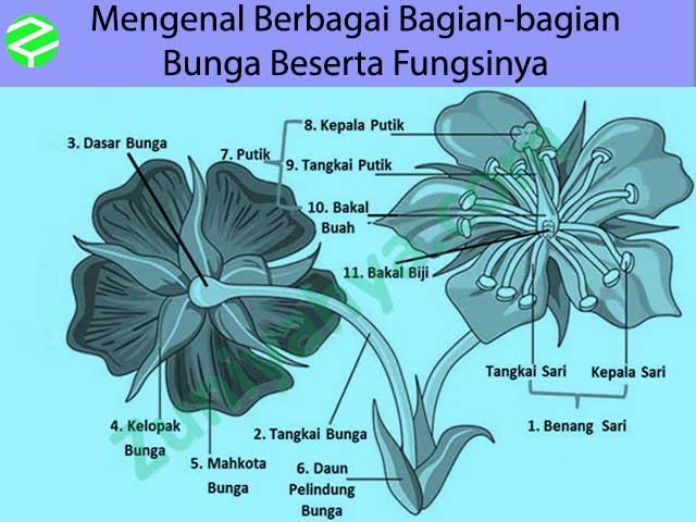 Mengenal Berbagai Bagian Bagian Bunga Beserta Fungsinya