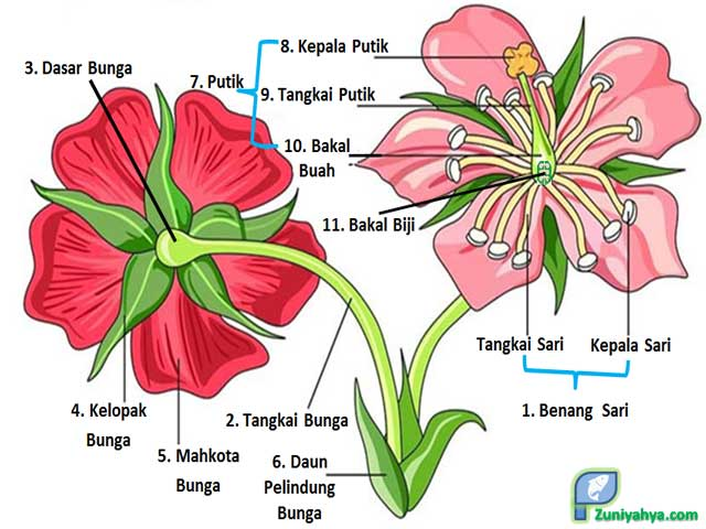 Struktur Bunga Lengkap