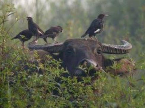 Macam-Macam Simbiosis Pada Hewan Dan Tumbuhan Beserta Contoh