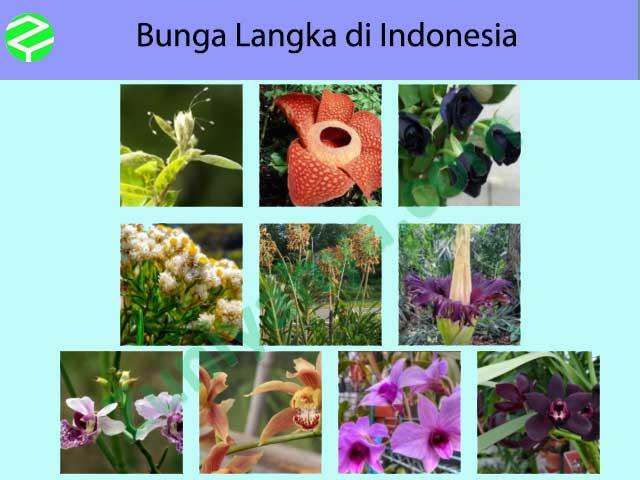 Bunga Langka di Indonesia