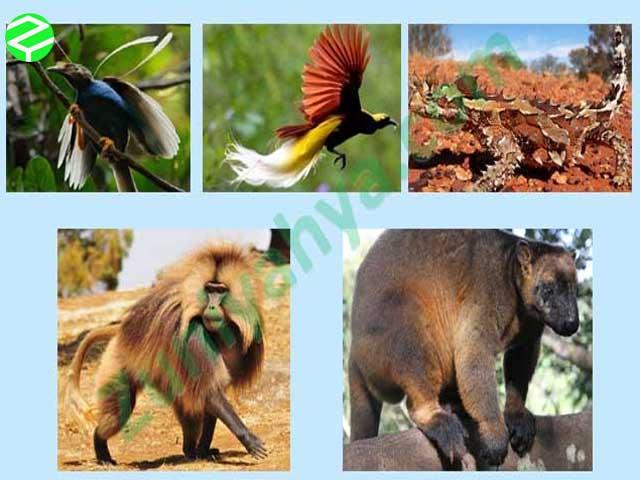 Contoh Habitat Hewan Langka