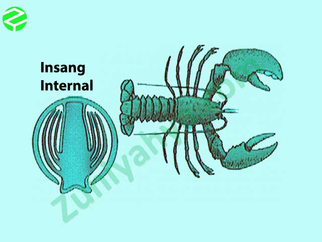 Insang Pada Kelompok Hewan Crustacea