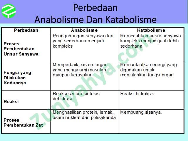 Perbedaan Anabolisme Dan Katabolisme