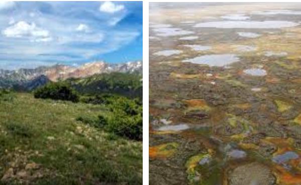 Tundra Alphine dan Tundra Arktik