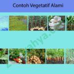 Contoh Vegetatif Alami