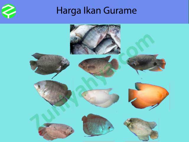 Harga Ikan Gurame