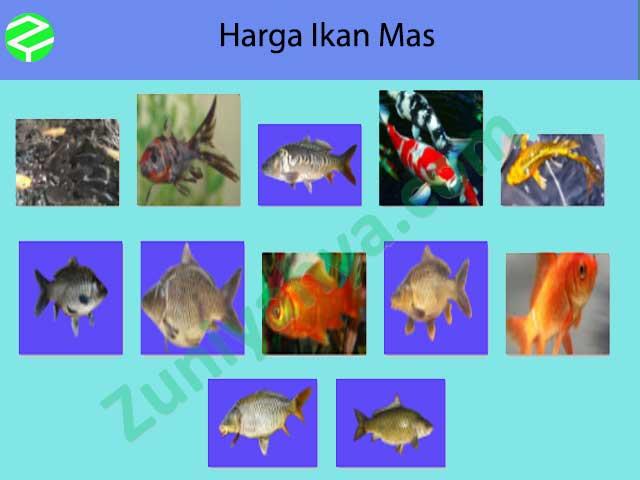 Harga Ikan Mas