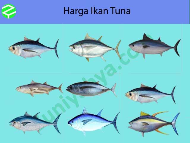 Harga Ikan Tuna