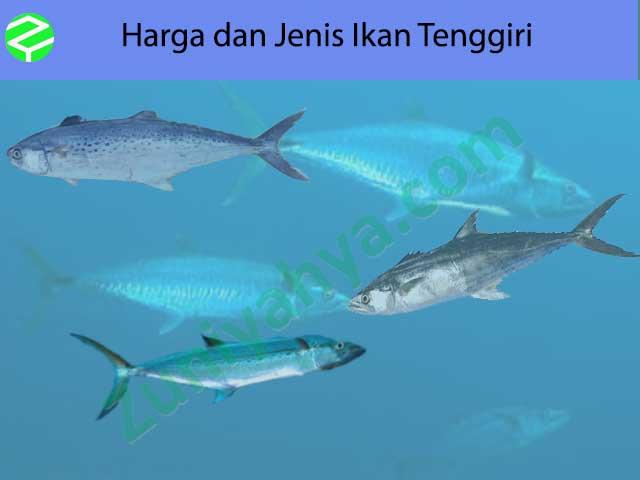 Harga dan Jenis Ikan Tenggiri